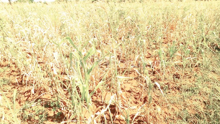 Lower shire to face food shortage