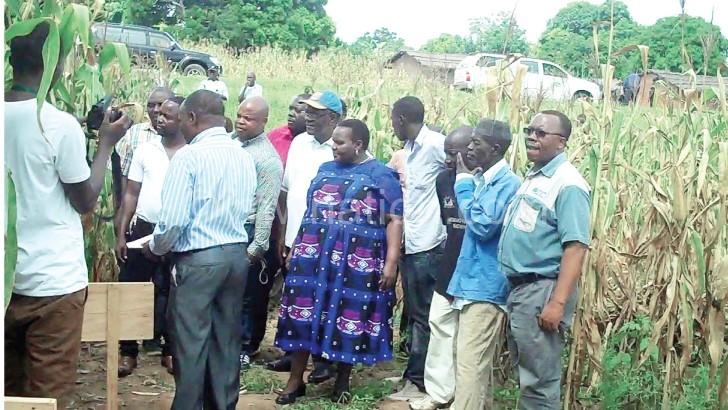 Drought-tolerant maize rescues Malawian farmers