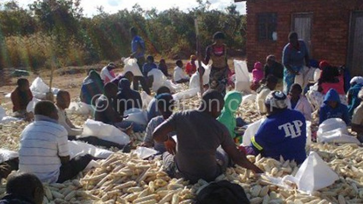 Student teachers at Dowa TTC  sort out the maize they harvested