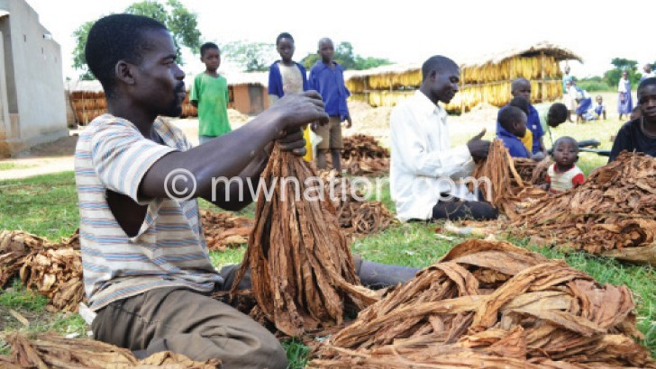 tobacco growers | The Nation Online