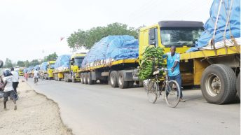 World Bank faults maize export ban