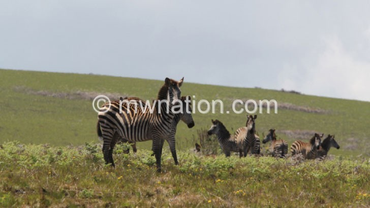 Wildlife is under threat in Malawi at parks such as this one
