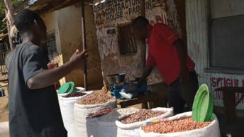 Legumes production  Project botched up