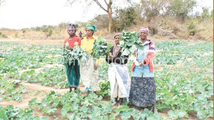 Farmer field schools approach  bearing fruits in Phalombe