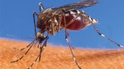 Dealing with malaria desease in malawi