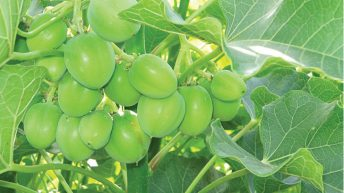 Firm mum on bio-fuel production