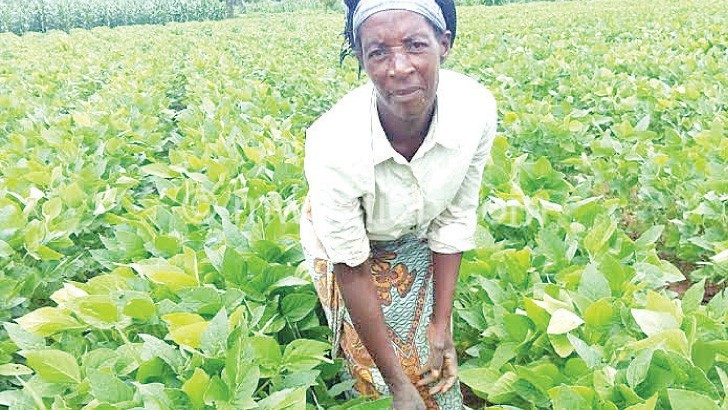 soya garden | The Nation Online