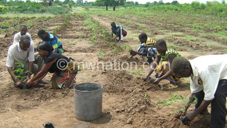 tree planting 1 | The Nation Online