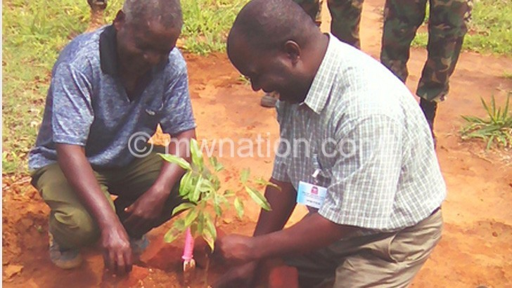 tree planting | The Nation Online