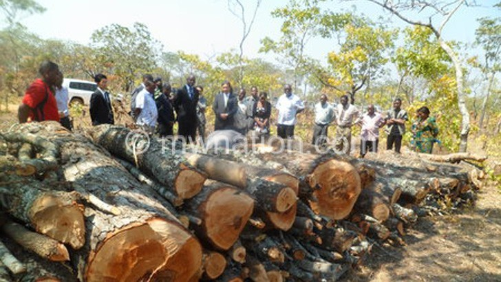 Kasungu Council embraces environment in its reforms