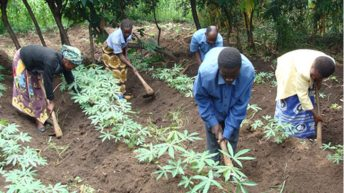 Agriculture for development agenda in Malawi