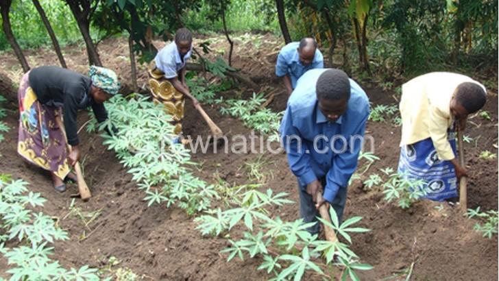 cassava | The Nation Online