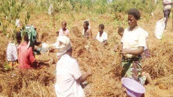 Women's lives improve  from cooperative