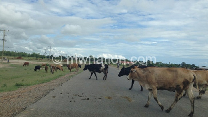 cows | The Nation Online