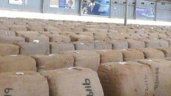 TCC against uncertified tobacco seeds
