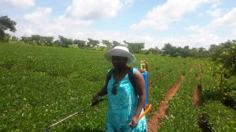 Fannie Gondwe: FemBioBiz Acceleration Programme Award Winner