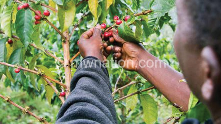 coffee | The Nation Online