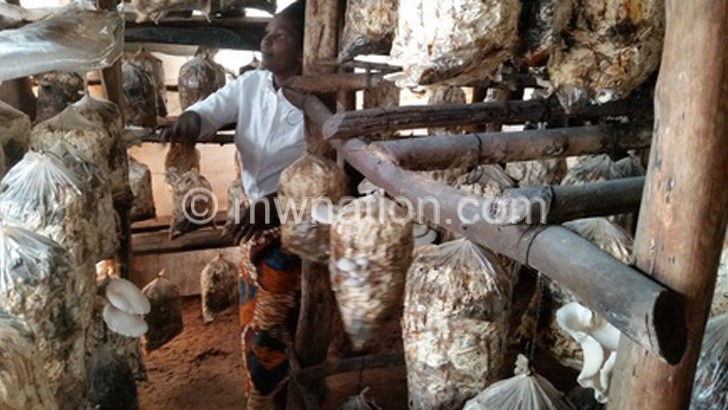Mchinji farmers earning big from mushroom