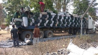 Forestry office impounds trucks carrying charcoal