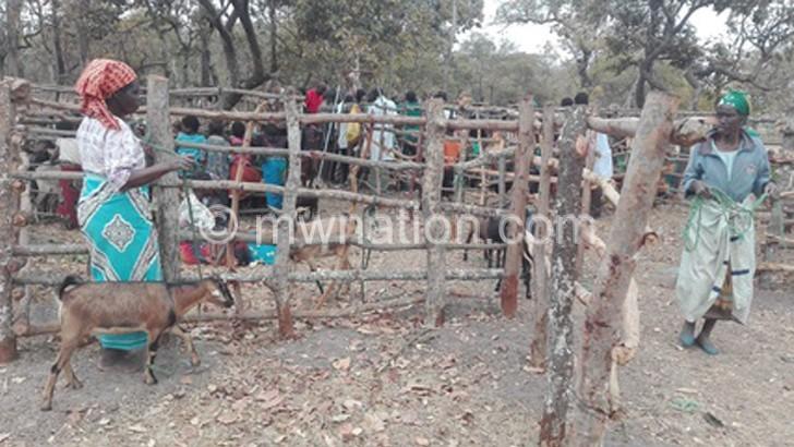 Goat breeding  excites LL farmers