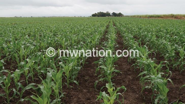 Commercial farming plan flops