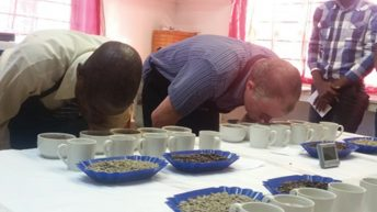 Government under fire on low coffee output