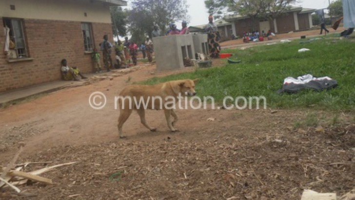 stray dogs | The Nation Online