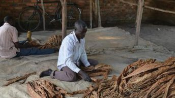 Tobacco firm plays down weather impact