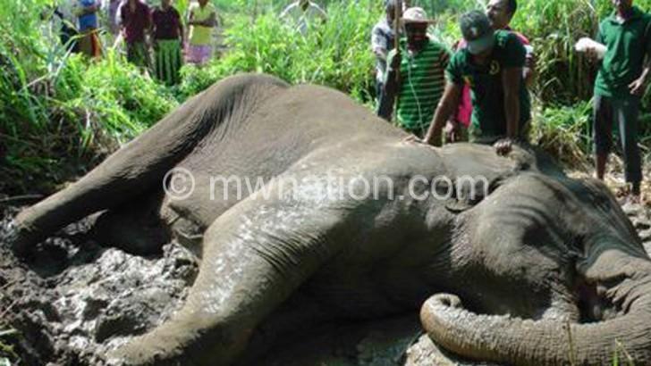 Research elephant gunned down in Vwaza