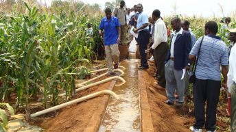 Agriculture sector develops  National Investment Plan