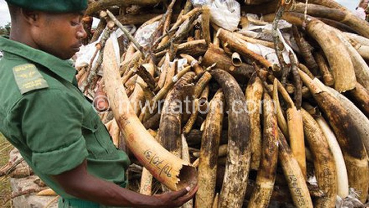 14 years imprisonment for possessing ivory