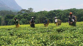 Malawi-intra Africa trade gap widens