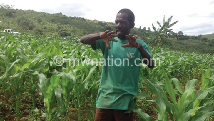 Farmers turn to herbs to fight armyworms