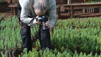 UK botanist impressed with  MJ Cedar restoration project