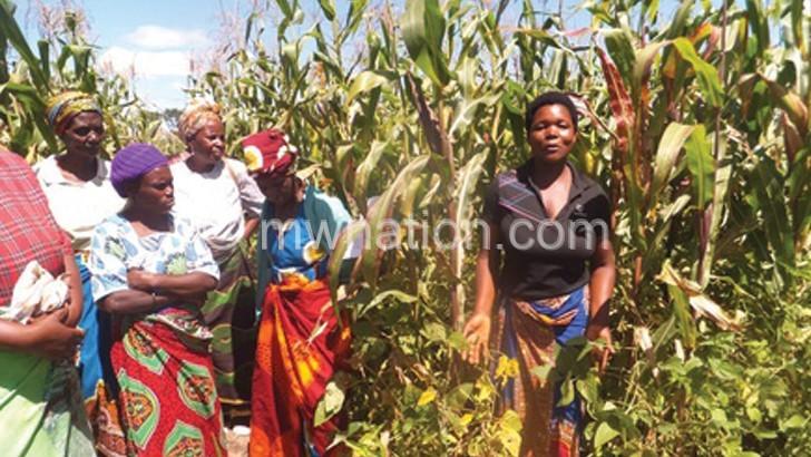 Crop diversity technologies excite Dedza farmers