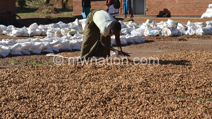groundnuts | The Nation Online