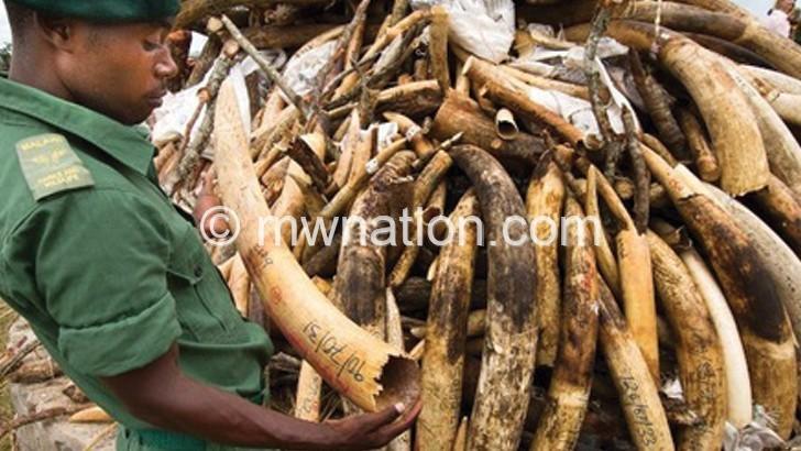 KK police arrest two for possessing ivory