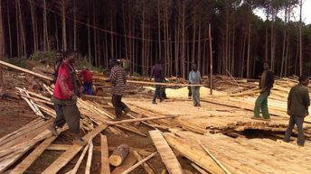 Government , timber millers  in new deal