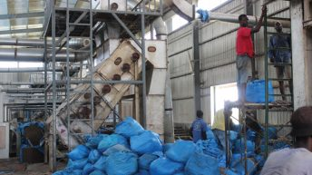 Revamping ailing cotton sector