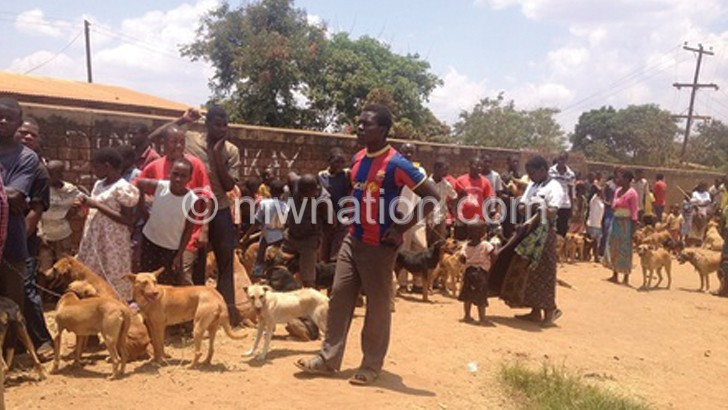 dogs | The Nation Online