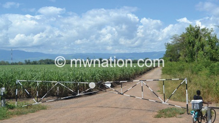 Chikwawa cane cutters strike over low wages