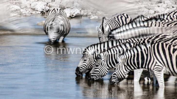 Bumps to Nyika National Park