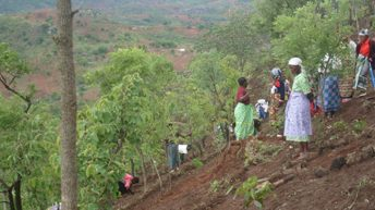 Let's work together to conserve forests—DOF