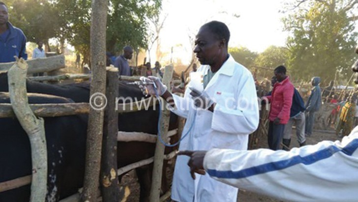 Foot and mouth vaccination starts in Neno