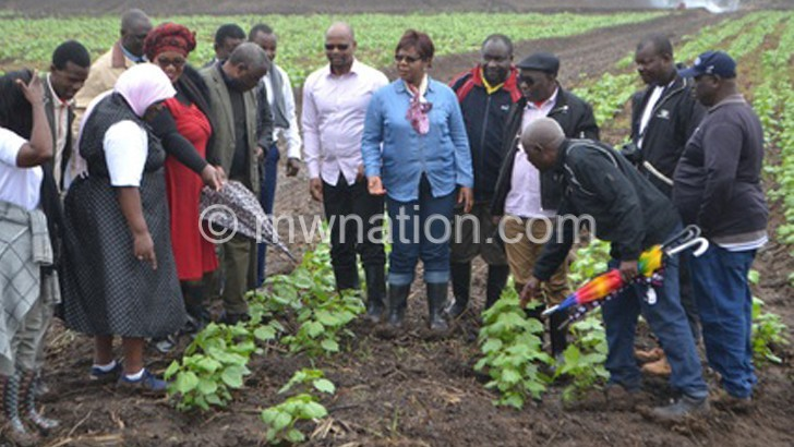ADMARC AND GREEN BELT OFFICIALS | The Nation Online