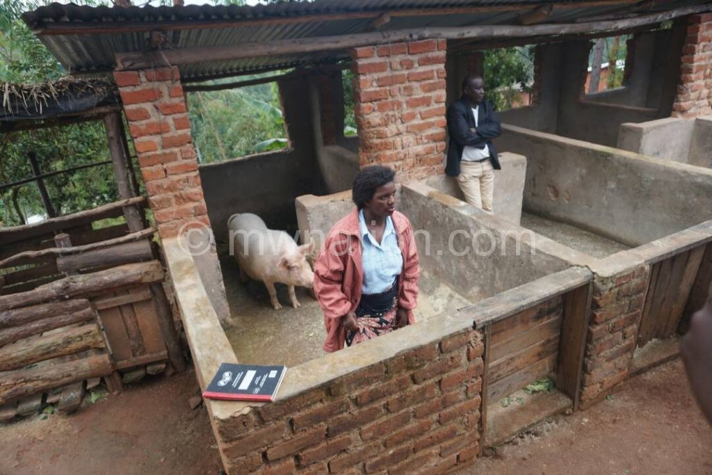 Nyirenda in pig house | The Nation Online