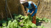 Govt seeks donors  in horticulture sector