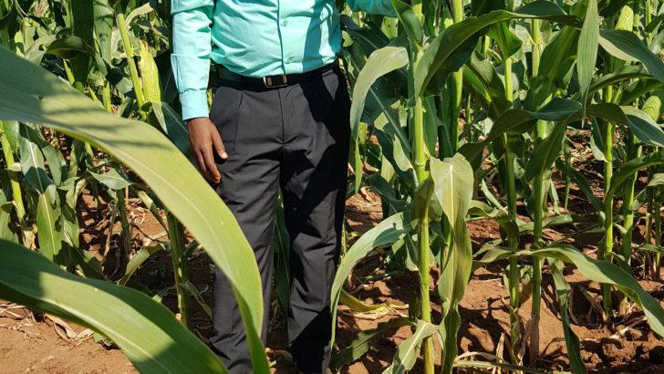 New maize disease threatens Malawi