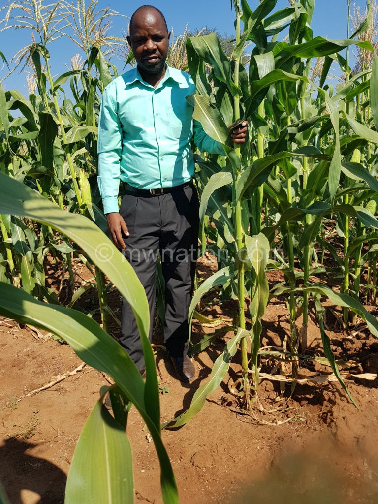 Maize | The Nation Online