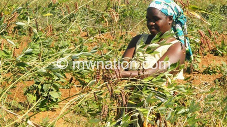 pigeon peas | The Nation Online